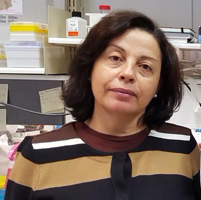 Paula Faustino (Dra.)
